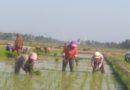 Petani Lampung Timur Keluhkan Air Saat Musim Tanam Tiba